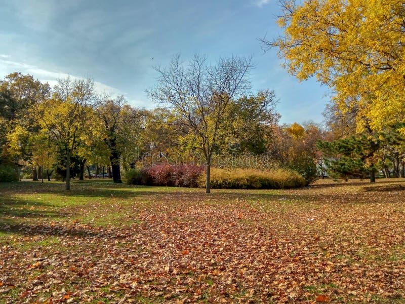 Samling av härliga färgrika Autumn Leaves: grönt gult, apelsin som är röd arkivbilder