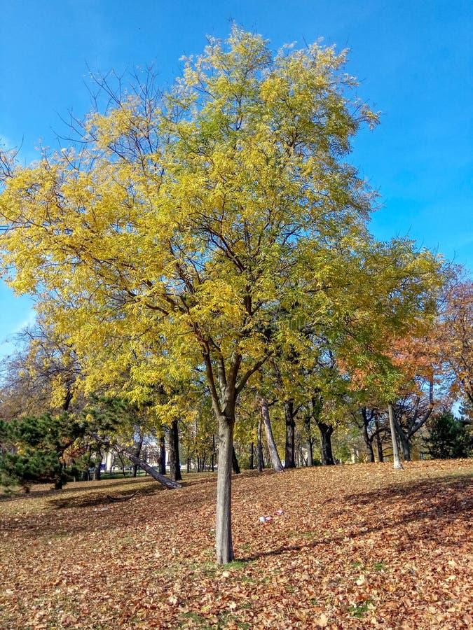 Samling av härliga färgrika Autumn Leaves: grönt gult, apelsin som är röd fotografering för bildbyråer