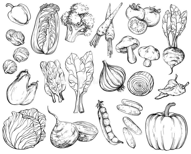 Samling av hand-drog grönsaker som är svartvit vektor illustrationer