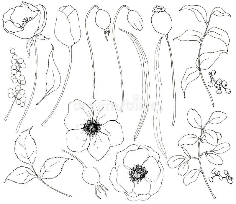 Samling av hand drog växter Den botaniska uppsättningen av skissar blommor och filialer med eukalyptussidor som isoleras på vit vektor illustrationer