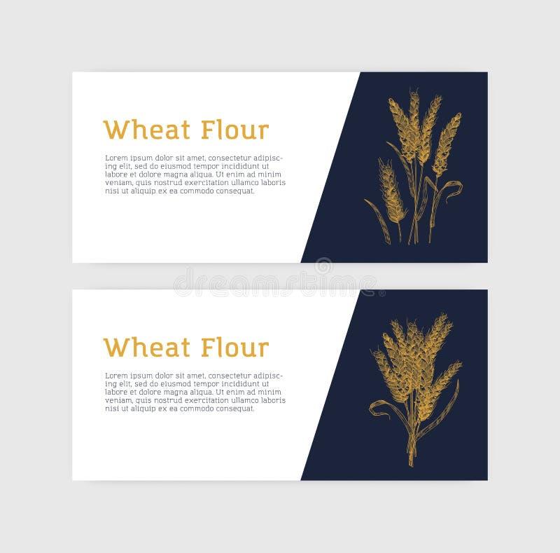 Samling av horisontalbanermallar med veteöron eller spikelets Kultiverad v?xt, s?des- korn eller matsk?rd royaltyfri illustrationer