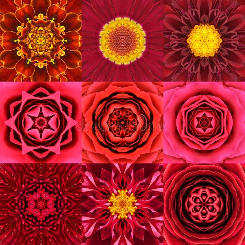 Samling av kalejdoskopet för nio den röda koncentriska blommaMandalas royaltyfria foton