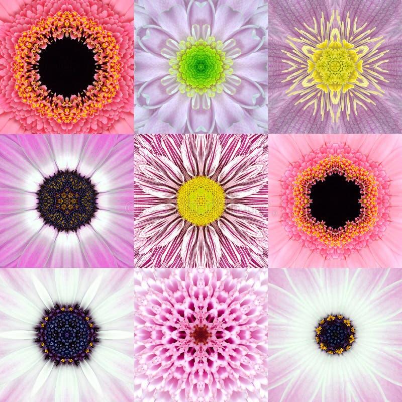Samling av kalejdoskopet för nio den rosa koncentriska blommaMandalas vektor illustrationer