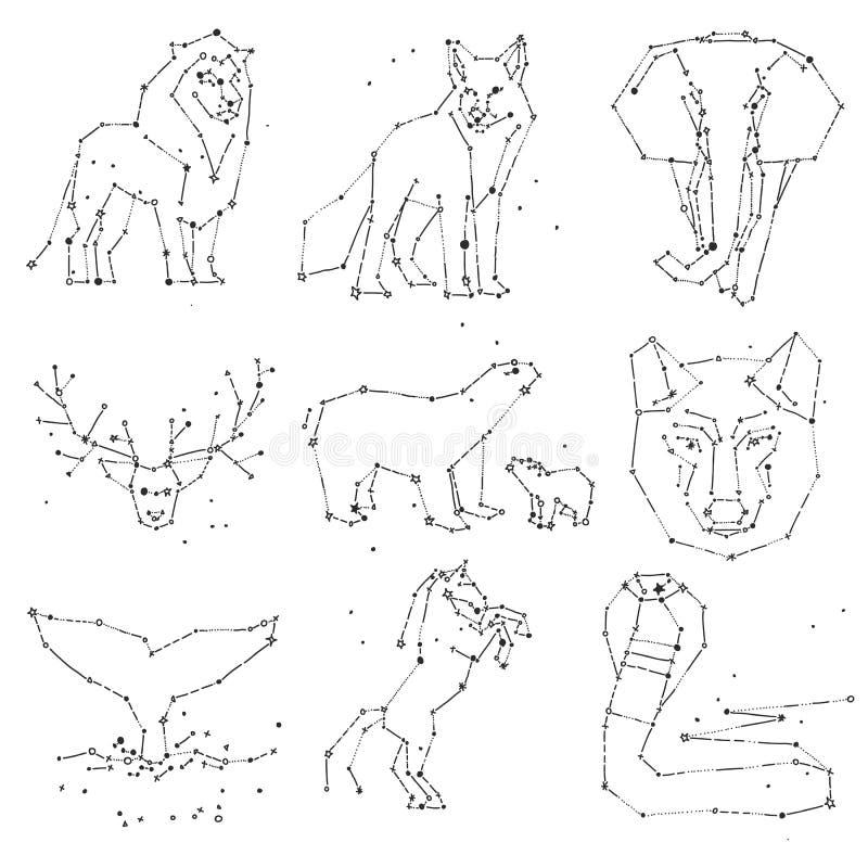 Samling av konstellation för handattraktiondjur på mörk himmel Skissad vilda djur med linjen och stjärnor, horoskopstil vektor illustrationer