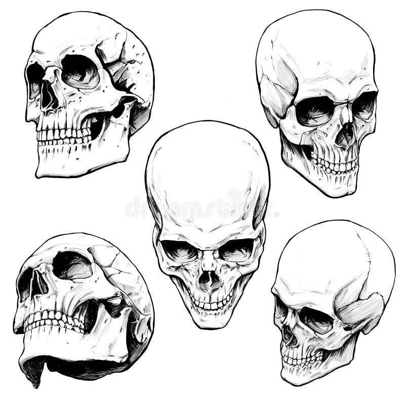Samling av mänskliga skallar stock illustrationer