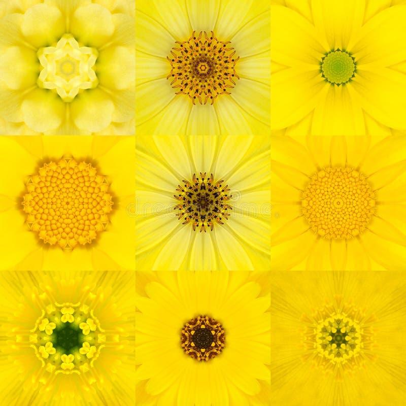 Samling av nio gul koncentrisk blomma Mandala Kaleidoscope fotografering för bildbyråer