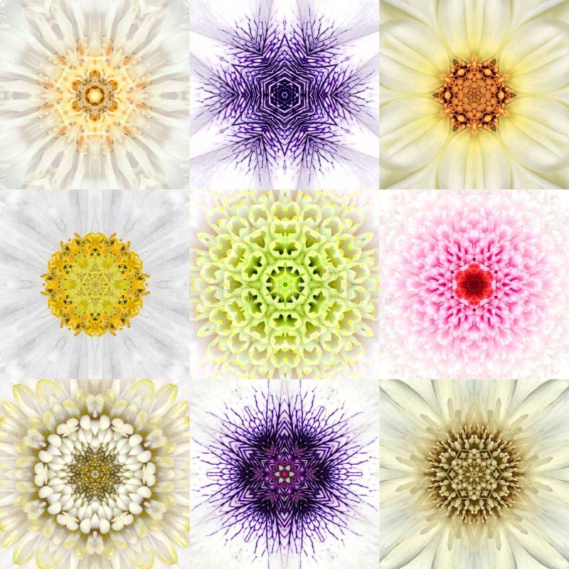 Samling av nio vita koncentriska blommaMandalas koncentriskt arkivbild