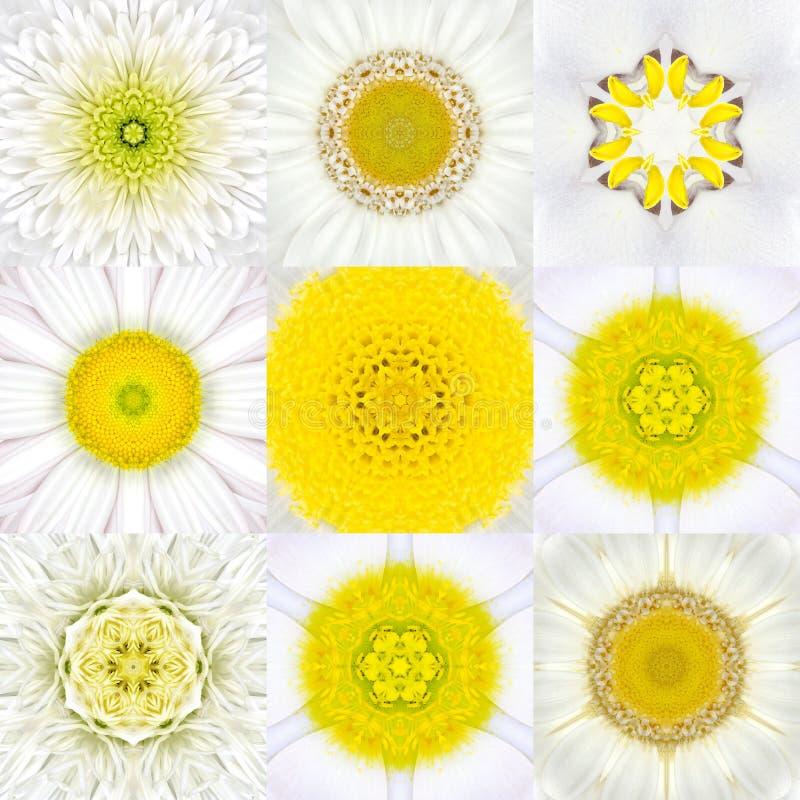 Samling av nio vita koncentriska blommaMandalas koncentriskt royaltyfri bild