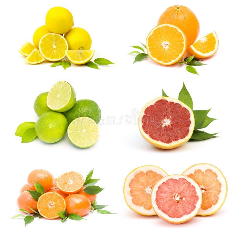 Samling av ny citrusfrukt arkivbilder