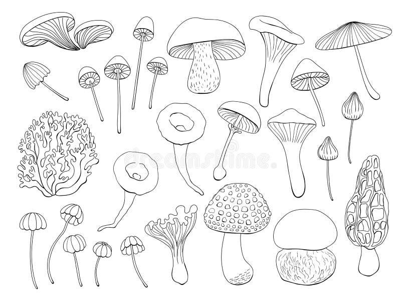 Samling av olika champinjoner royaltyfri illustrationer