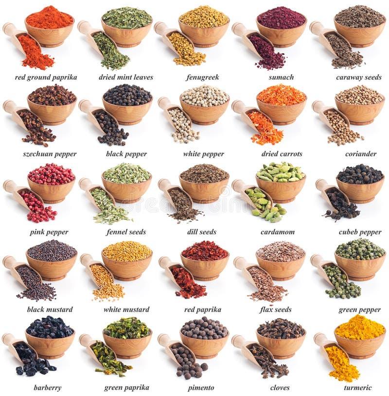 Samling av olika kryddor och örter royaltyfria foton