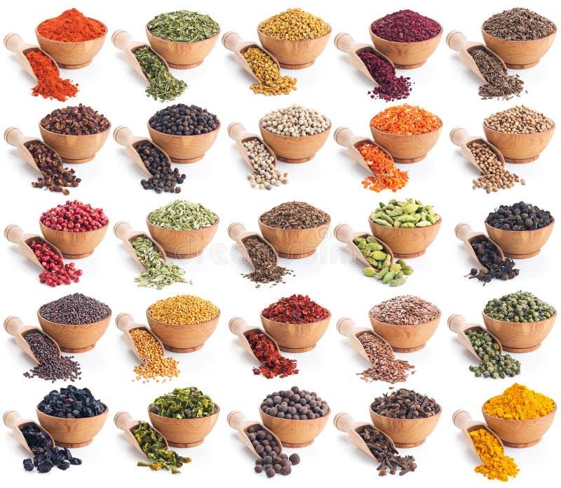 Samling av olika kryddor och örter som isoleras på vit royaltyfri fotografi