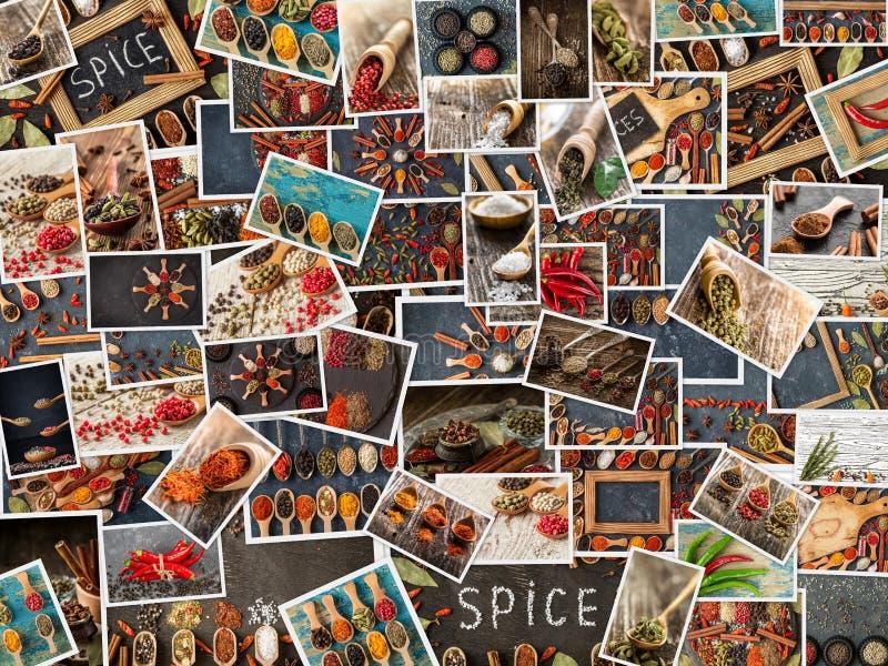 Samling av olika kryddor och ?rtar St?ll in av smaktillsatser royaltyfri bild