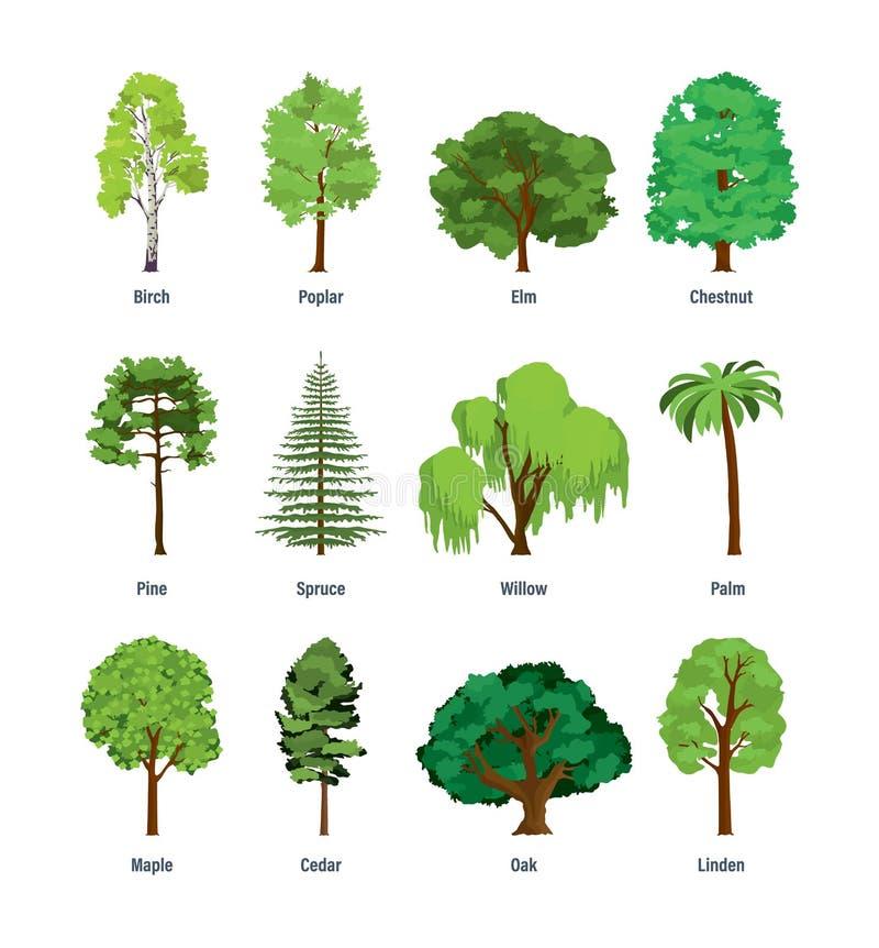 Samling av olika sorter av träd royaltyfri illustrationer