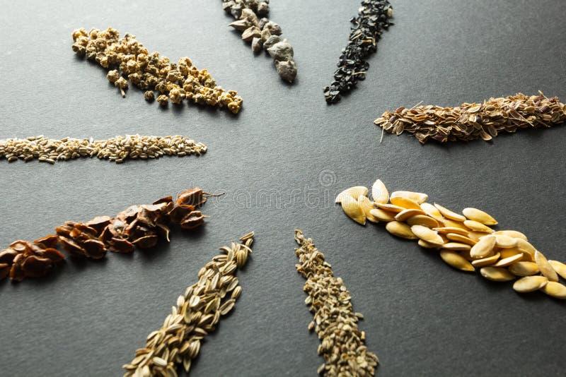 Samling av organiskt frö för att plantera i jorden: rabarber sallad, beta, spenat, lök, dill, melon, morot, fänkål som isoleras royaltyfria bilder