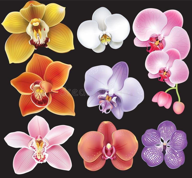 Samling av orkidéblomman royaltyfri illustrationer