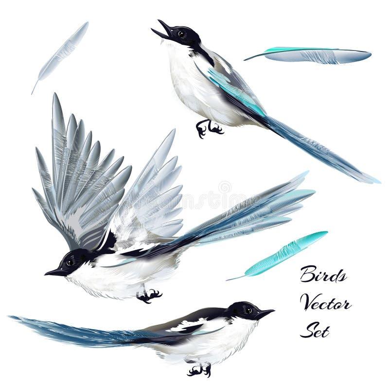 Samling av realistiska fåglar för vektor för design vektor illustrationer