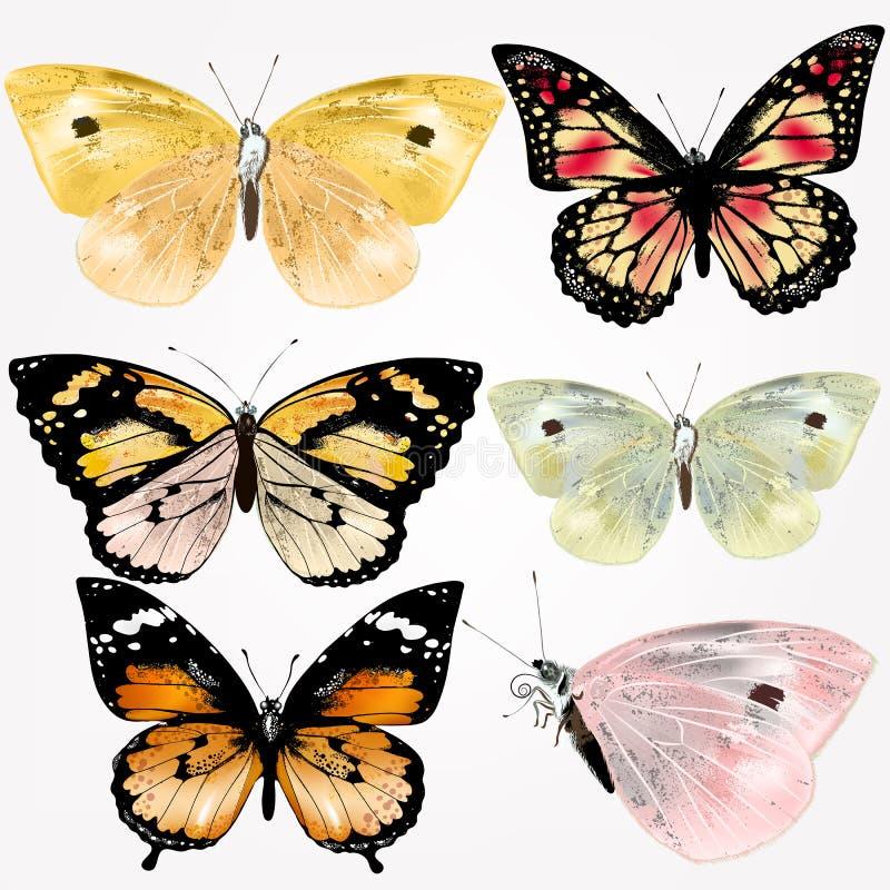 Samling av realistiska fjärilar för vektor för design stock illustrationer
