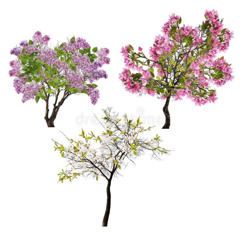 Samling av tre blomstra träd som isoleras på vit fotografering för bildbyråer