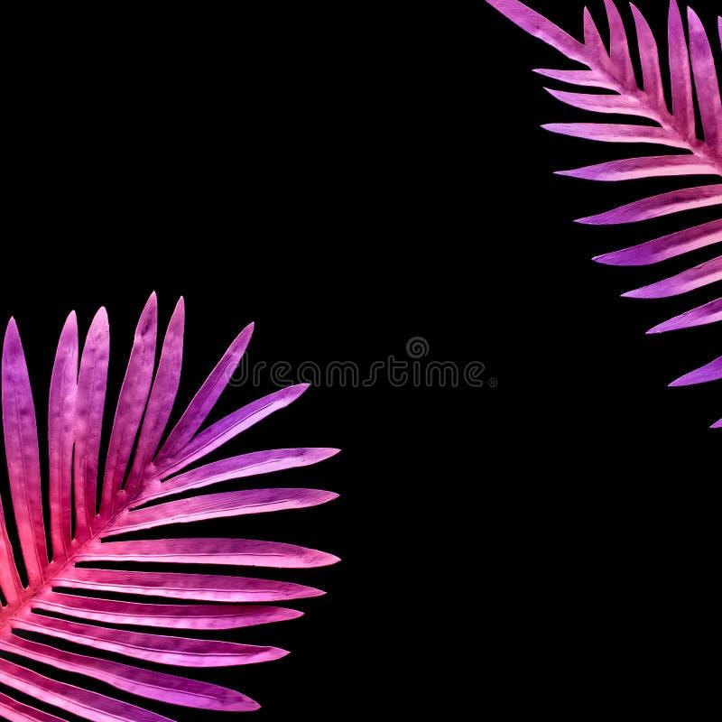 Samling av tropiska sidor, lövverkväxt i färgrik lutning på svart utrymmebakgrund royaltyfri bild