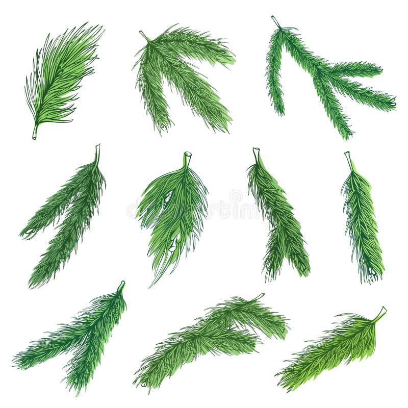 Samling av vektorfärgbilder för Evergreen-pine-grengrenar stock illustrationer
