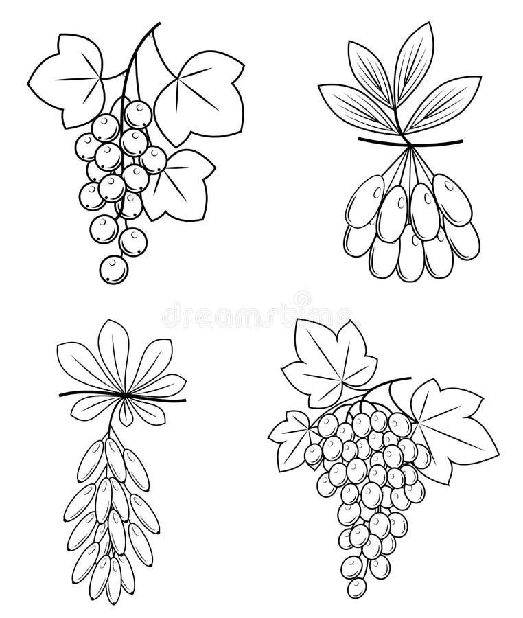 Samling Denna filial av barberryen, druvor, skogskornell, vinbär Läckra sunda bär för hälsa och medicin Grafisk bild stock illustrationer