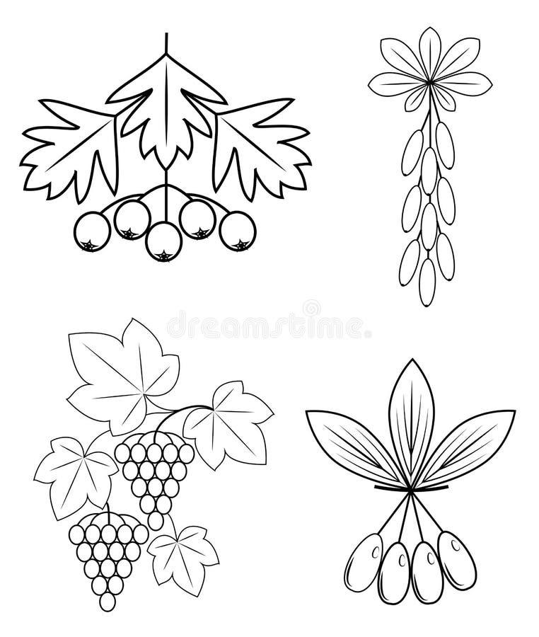 Samling Denna filial av barberryen, druvor, skogskornell, vinb?r L?ckra sunda b?r f?r h?lsa och medicin Grafisk bild stock illustrationer