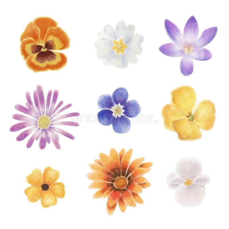 Samling för blommor för vektorvattenfärgvår vektor illustrationer