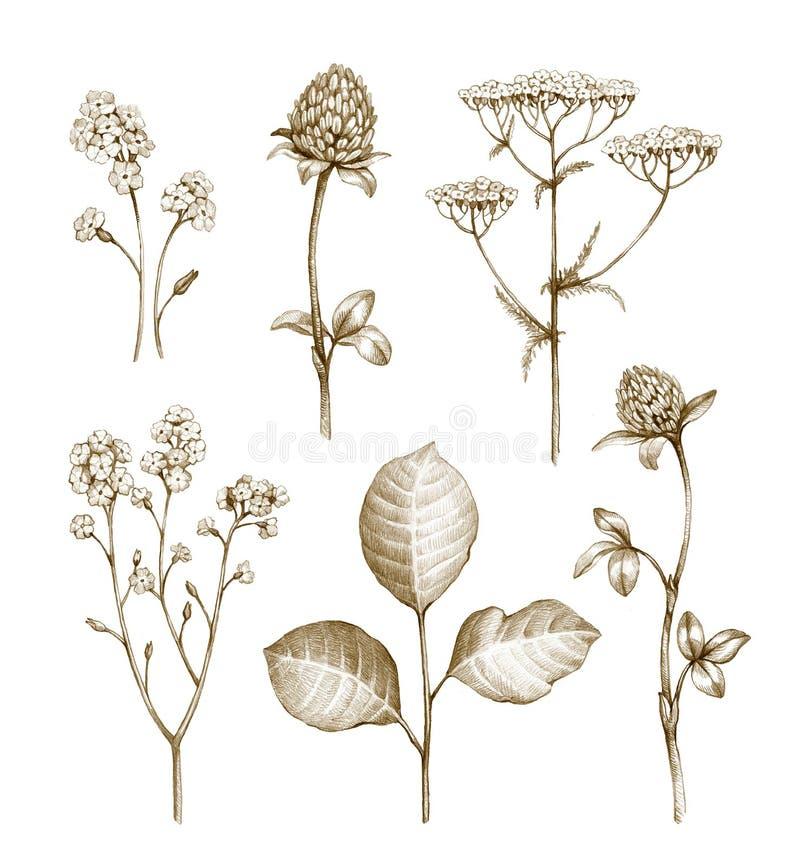 Samling för lösa blommor stock illustrationer