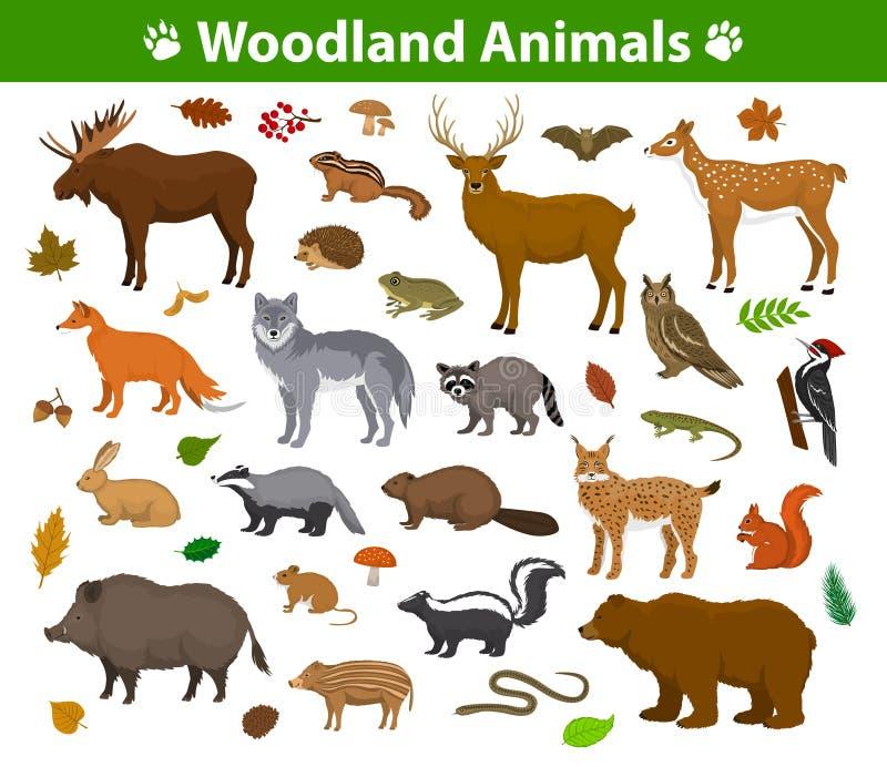 Samling för skogsmarkskogdjur royaltyfri illustrationer