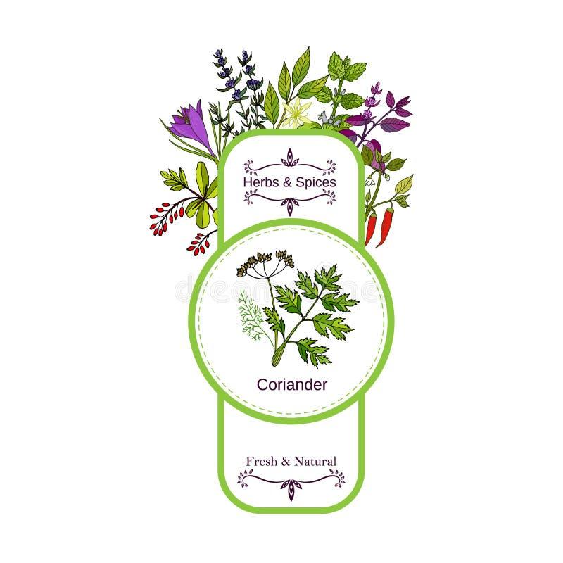 Samling för tappningört- och kryddaetikett koriander stock illustrationer