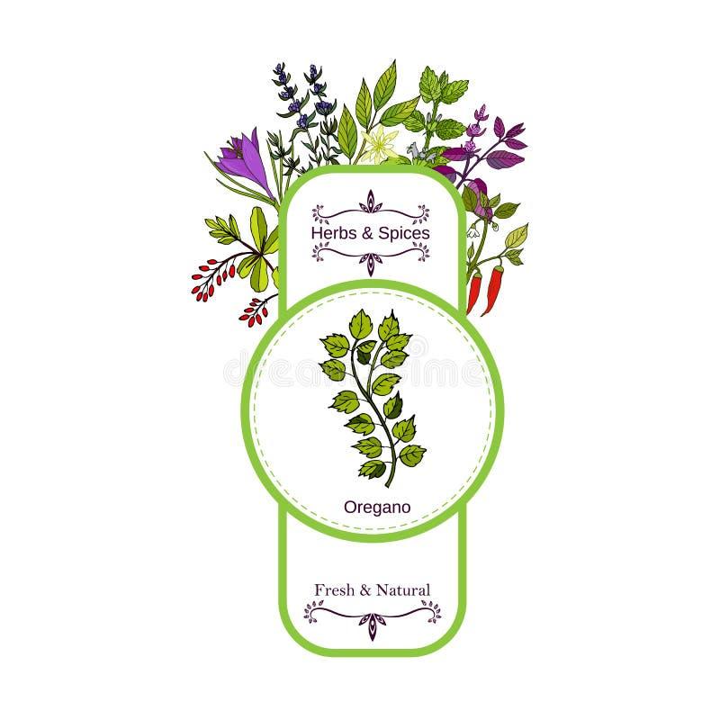 Samling för tappningört- och kryddaetikett oregano royaltyfri illustrationer
