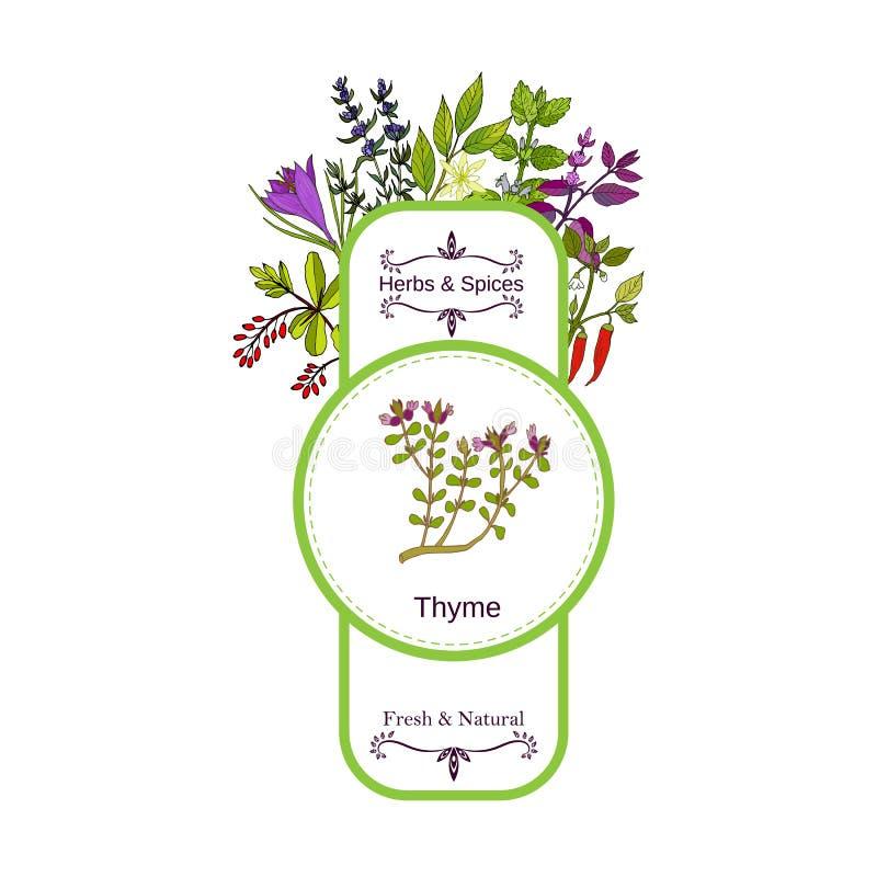Samling för tappningört- och kryddaetikett Timjan royaltyfri illustrationer
