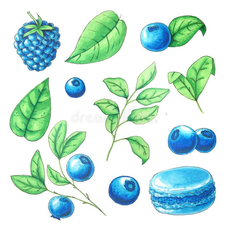 Samling för vattenfärgsommarfrukter vektor illustrationer