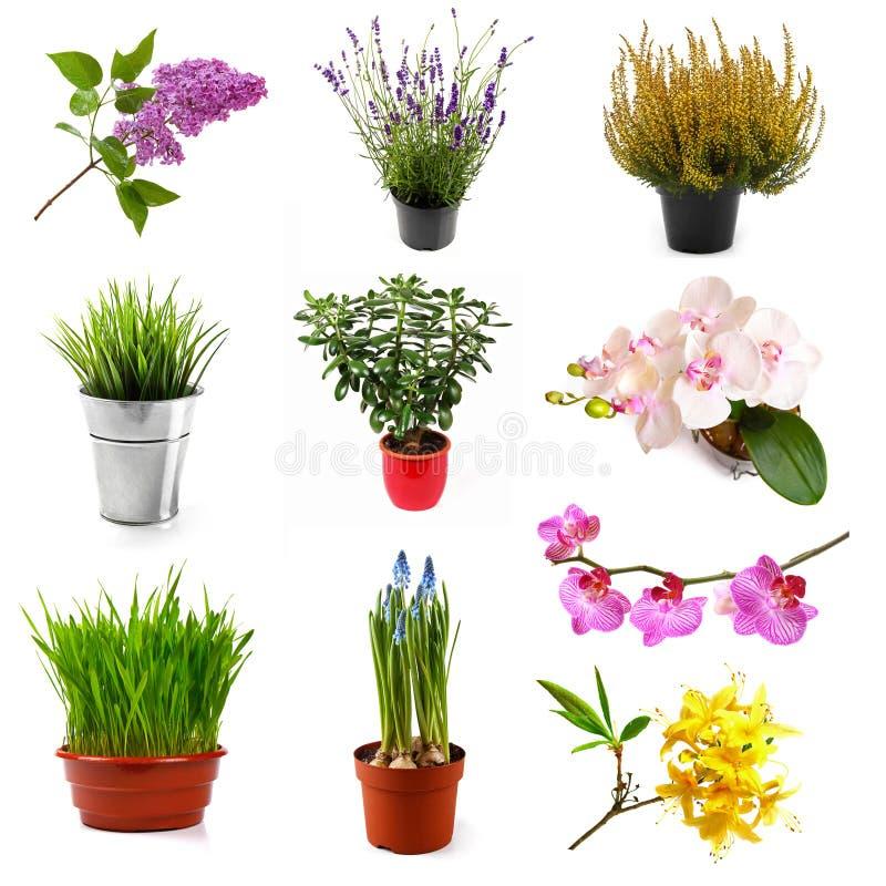 Samling med olika blommor och växter som isoleras på vit arkivfoto