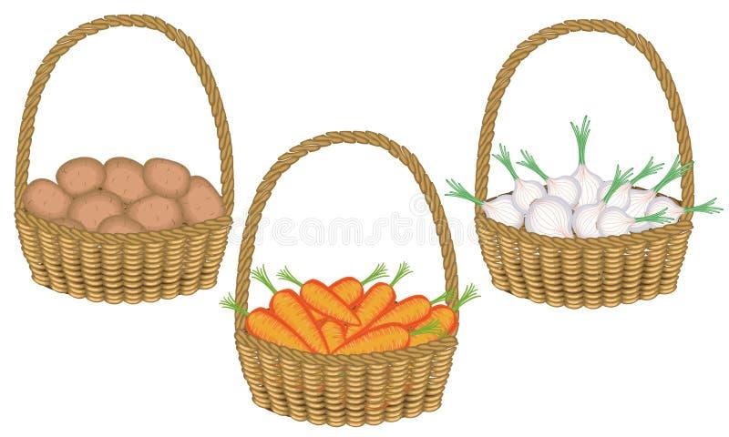 Samling Soran är en rik skörd i härliga nya potatisar för en vide- korg, lökar, morötter Gr?nsaker ?r n?dv?ndiga f?r royaltyfri illustrationer