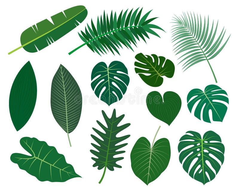 Samlingen av den tropiska sidavektorn ställde in isolerat på vit bakgrund stock illustrationer