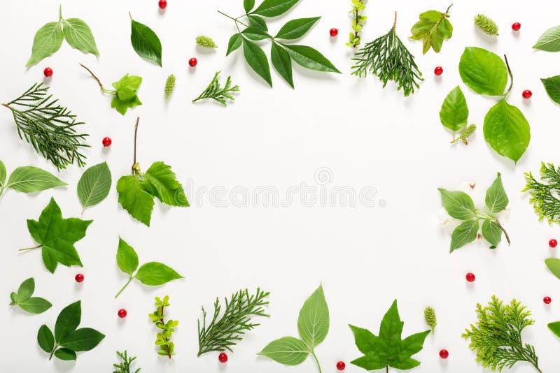 Samlingen av gräsplan lämnar bästa sikt royaltyfri bild