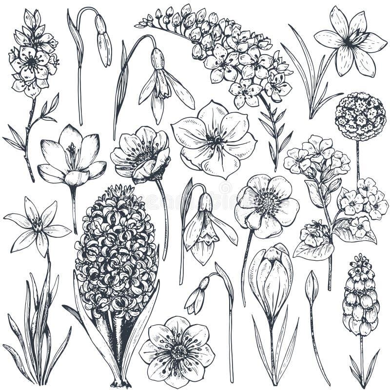 Samlingen av handen drog våren blommar och växter stock illustrationer