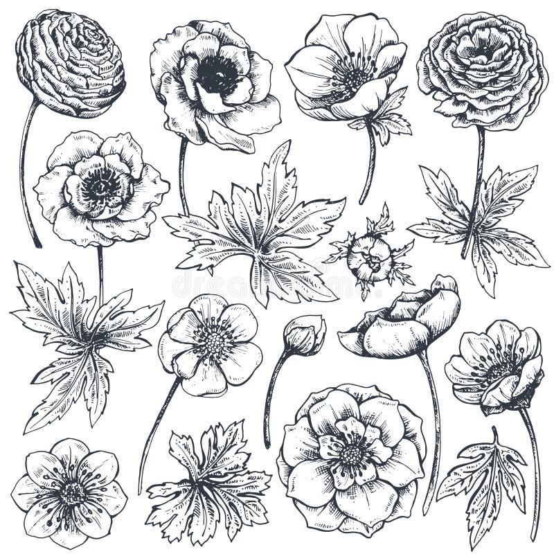 Samlingen av handen drog våren blommar och växter royaltyfri illustrationer