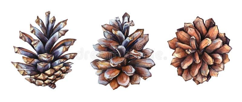 Samlingen av realistiska vattenfärgillustrationer av sörjer kottar på vit bakgrund royaltyfri illustrationer