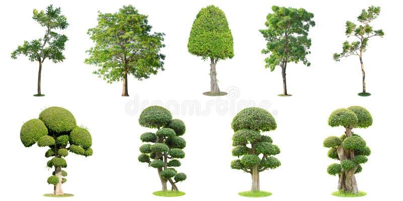 Samlingen av träd och bonsaiträdet som isoleras på vit backgr royaltyfri fotografi