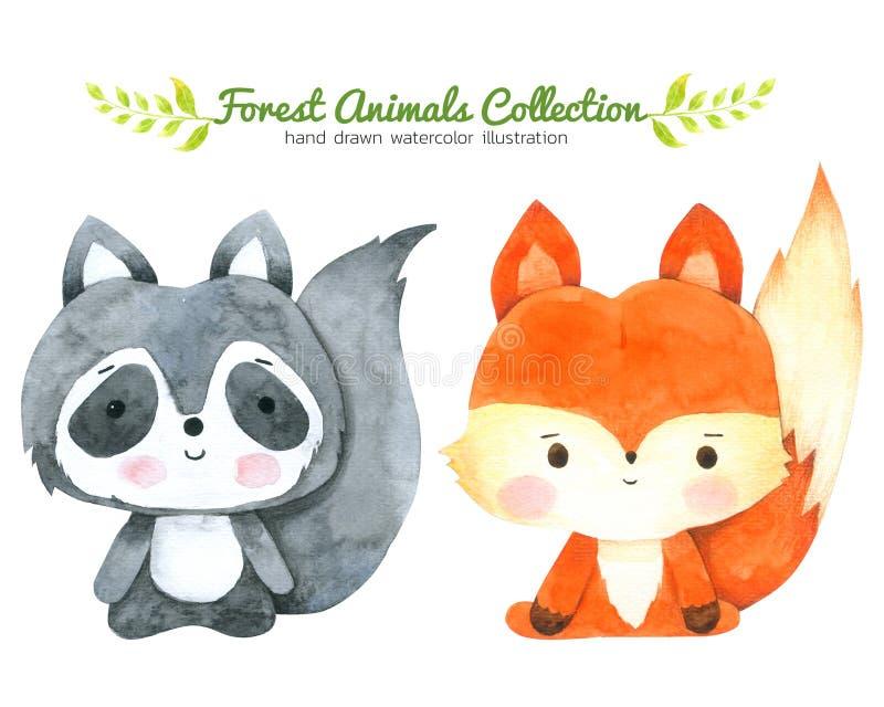 Samlingen för räv- och tvättbjörntecknad filmvattenfärgen som isolerades på vit bakgrund, drog Forest Animal Hand, målade teckene stock illustrationer
