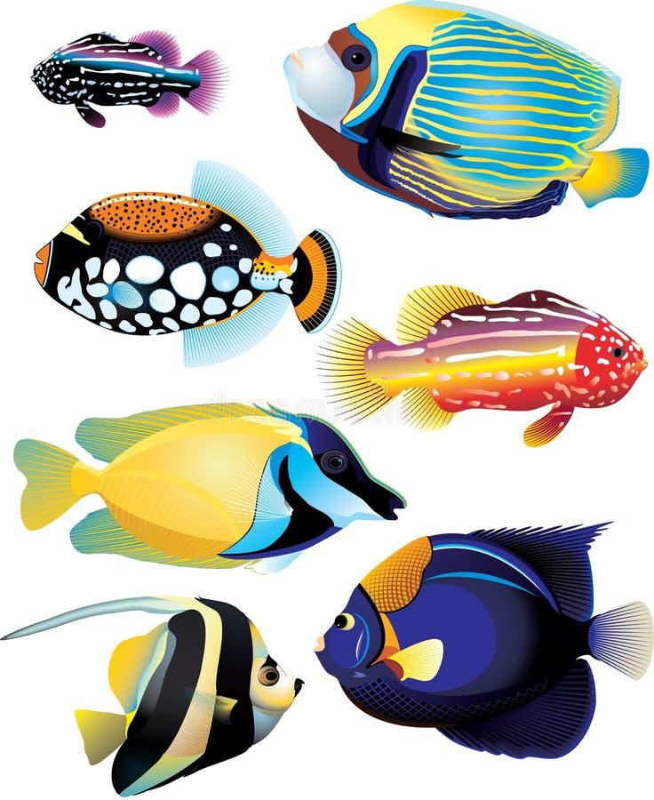 samlingen fiskar tropiskt stock illustrationer