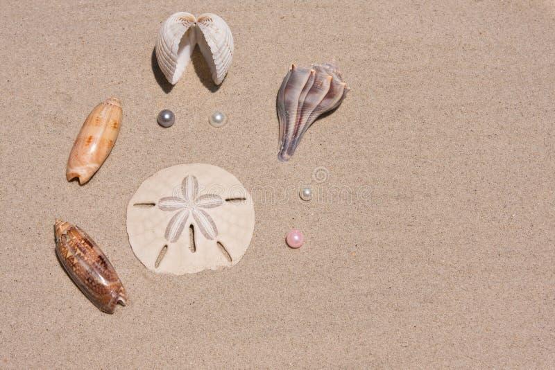 samlingen pryder med pärlor snäckskal royaltyfri bild