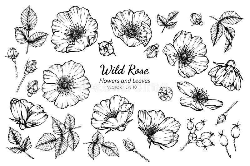 Samlingen ställde in av den lösa rosa blomman och sidor som drar illustrationen stock illustrationer