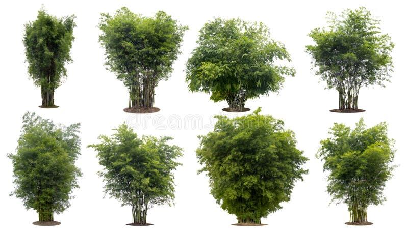 Samlingsbambuträd som isoleras på vit bakgrund med urklippbanan royaltyfria foton