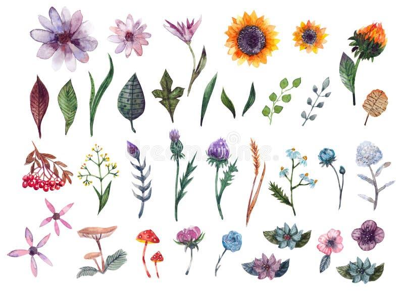 Samlingsträdgård och löst, skogört, blommor, filialer, murshrooms stock illustrationer