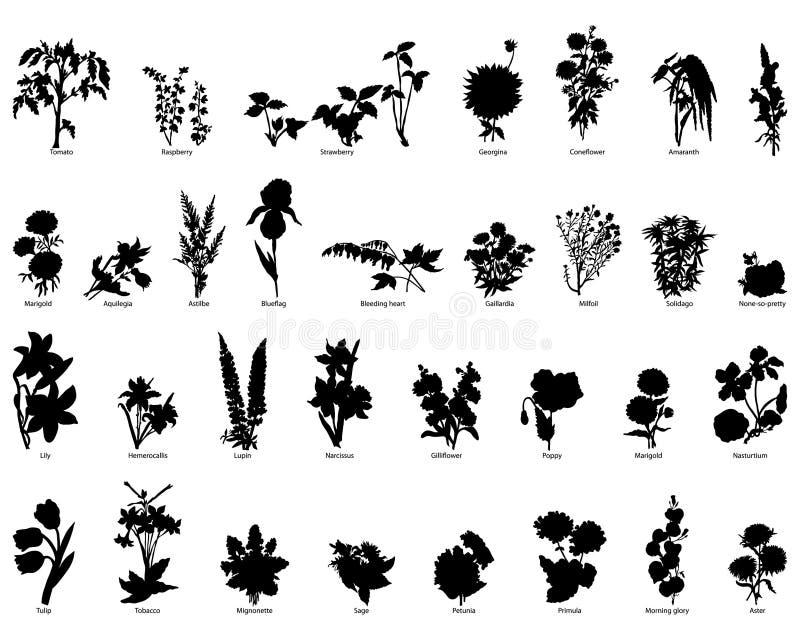 samlingsväxter royaltyfri illustrationer