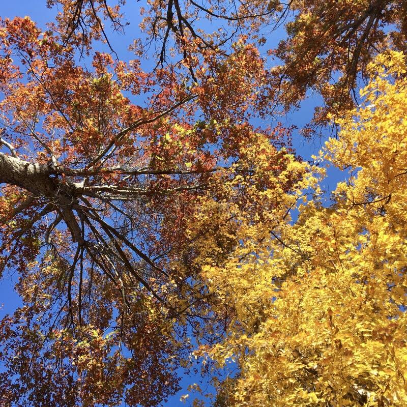 Sammandrabbning av träd arkivfoton